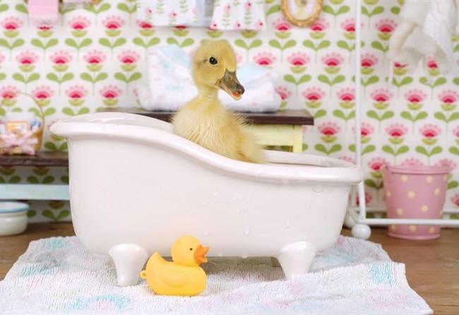 In bagno tutti gli accessori per rilassarsi nella vasca e nella doccia - Tisane per andare in bagno ...
